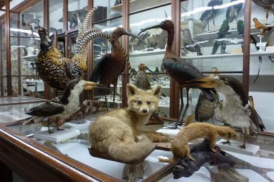 Visite Commentée Des Collections. à Chambery