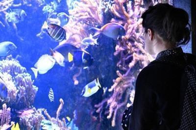 Visite Commentée Des Trésors De L'aquarium à Paris 12ème