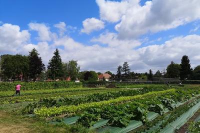 Visite Commentée - La Permaculture à Bougival