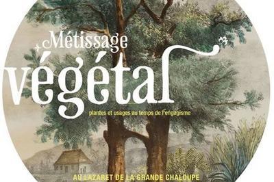 Visite De L'exposition  Métissage Végétal à La Possession