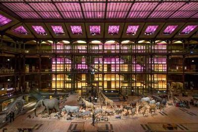 Visite De La Grande Galerie De L'evolution à Paris 5ème