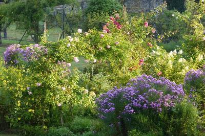 Visite Découverte De La Vaste Roseraie Et De La Glorieuse Floraison Des Asters. à Saint Pere