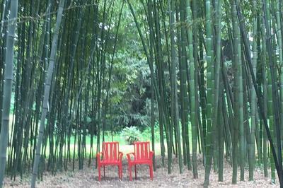 Visite Du Jardin Bambous En Provence à Eyragues
