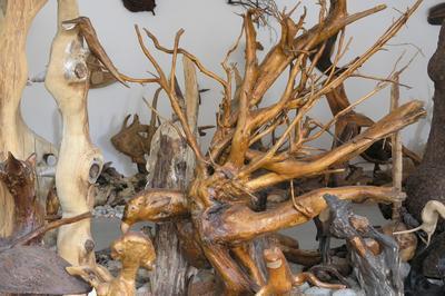 Visite Du Musée Des 1001 Racines à Cornimont