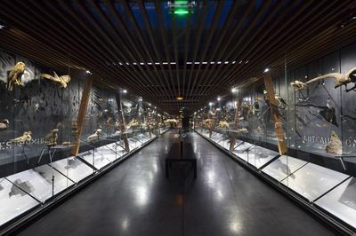 Visite Flash Dans Les Collections à Elbeuf
