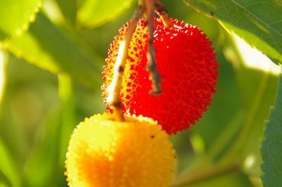Visite Guidée Arboretum à Lunel
