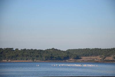 Visite Guidée Avec Observation Des Oiseaux Des étangs à Gruissan