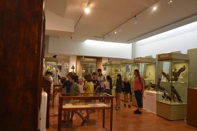 Visite Guidée Dans L'exposition Du Cabinet De Curiosités à La Taxidermie Contemporaine à La Rencontre Du Savant Léon Olphe-galliard. à Gap