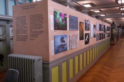 Visite Guidée De L'exposition Wildlife Photographer Of The Year 2016 à Rouen