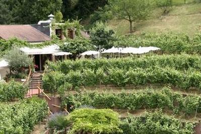 Visite Guidée Des Caves Du Chemin Des Vignes à Issy les Moulineaux