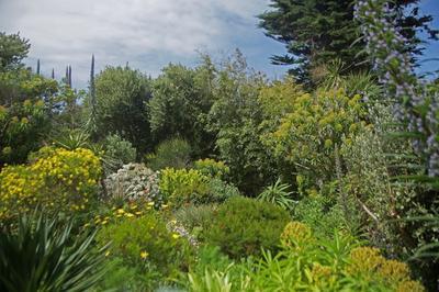 Visite Guidée Du Jardin Botanique Et De La Cour Du Château De Vauville