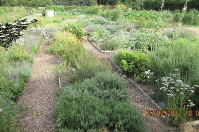 Visite Guidée Du Jardin De Plantes Médicinales à Monsures