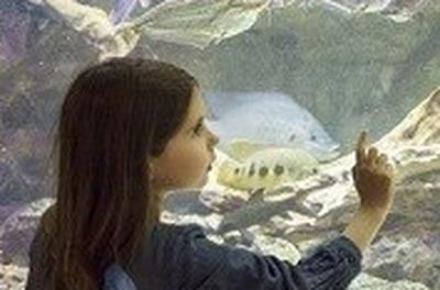 Visite Guidee : Les Tresors De L'aquarium Du Palais De La Porte Doree à Paris 12ème