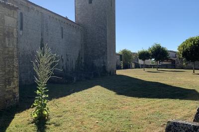 Visite Libre De L'église Notre-dame De La Nativité à Le Mung