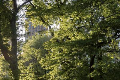 Visite Libre De L'exposition La Ville-forêt. Vers Une Nouvelle Culture Urbaine à Lyon