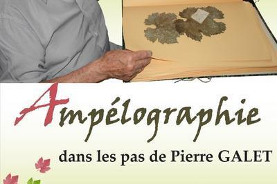 Visite Libre De L'exposition «ampélographie, Dans Les Pas De Pierre Galet». à Montmelian