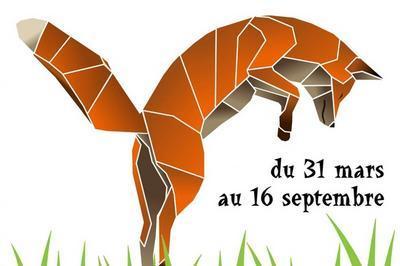 Visite Libre De L'exposition Temporaire Renard, Qui Es-tu ? à Blois
