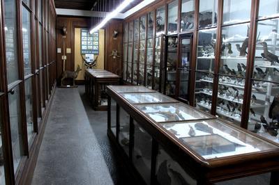 Visite Libre Des Collections. à Chambery