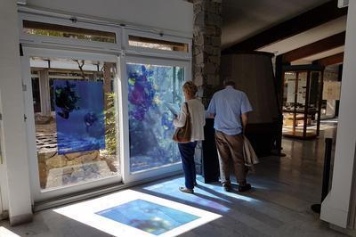Visite Libre Des Collections Permanentes à Castelnau de Levis