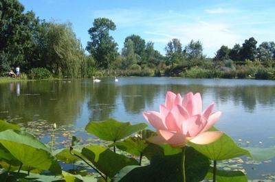 Visite Libre Des Jardins Aquatiques à Saint Didier sur Chalaronne