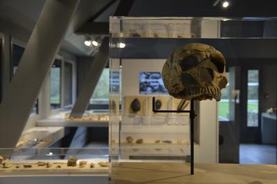 Visite Libre Du Musée De Préhistoire à Thorigne en Charnie
