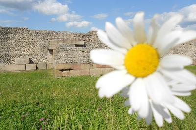 Visite Libre Du Site Archéologique De Jublains