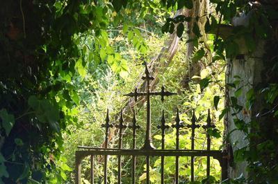 Visite Libre Et Documentée En Patrimoine Végétal à Mottier