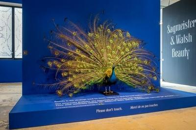 Visite Racontée De L'exposition « Beauty » à Cognac