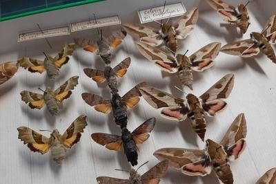 Visites Découvertes : La Biodiversité, Un Patrimoine Qui Conte ! à Le Revest les Eaux