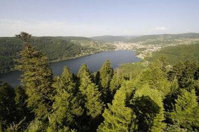 Vosges, l'appel de la forêt à La Bresse