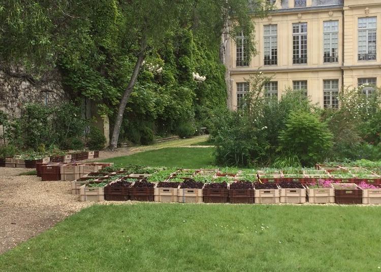 1er Parcours Biodiversité Dans Le Quartier Du Marais à Paris 4ème