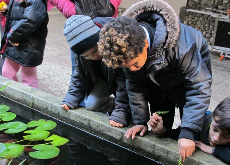 Ateliers Jeune Public : Les Secrets Du Jardin De La Villa Arson (6-10 Ans) à Nice