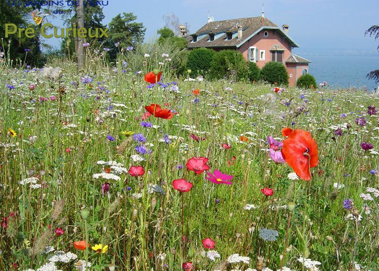 Visite Commentée Un Voyage En Compagnie De Plantes à Evian les Bains