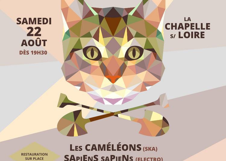 Festival Chat'Pelle - 6ème édition 2020