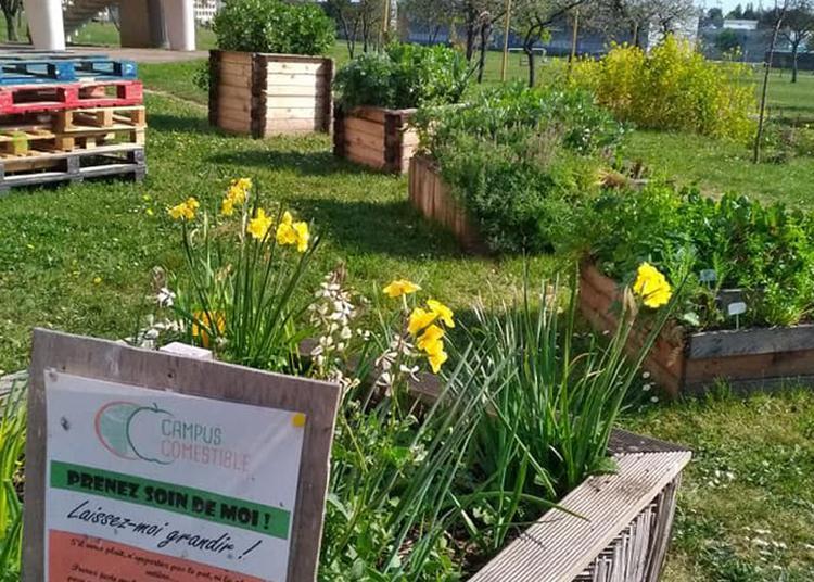 À La Découverte Des Jardins Partagés ! à Dijon