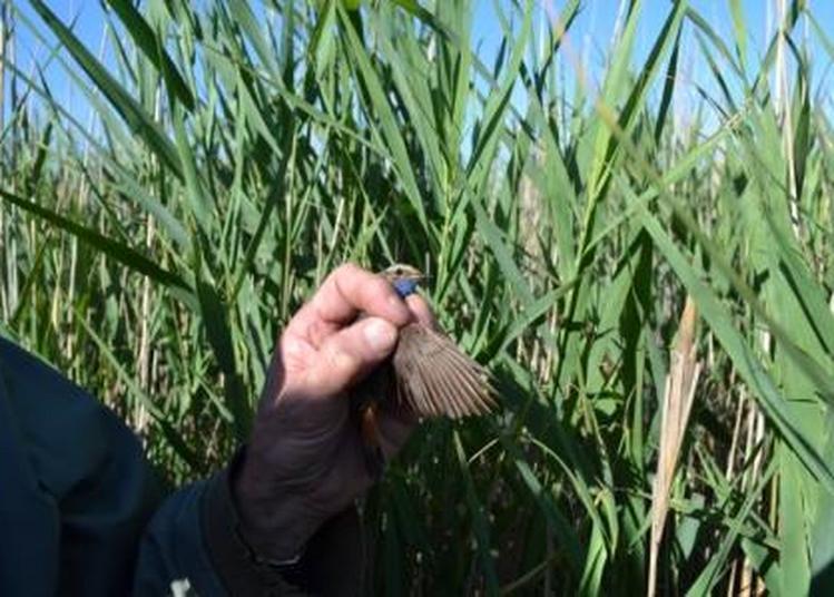 A la découverte des oiseaux à Braud et saint Louis