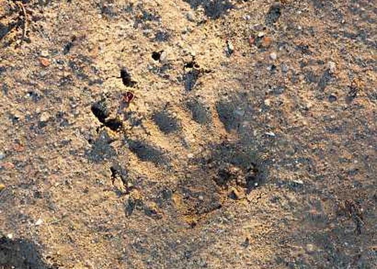 A la découverte des traces des animaux à Braud et saint Louis