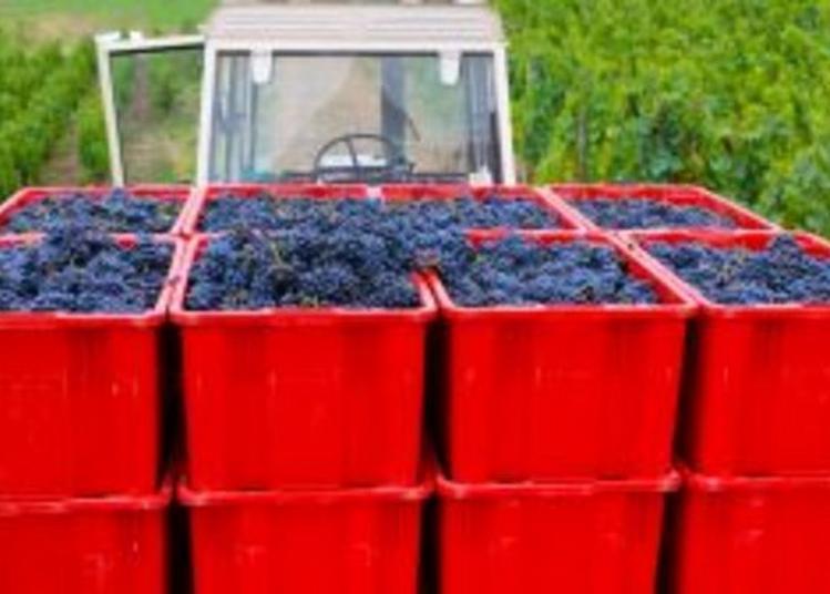 À La Découverte Des Vignobles De Châteaugay à Chateaugay