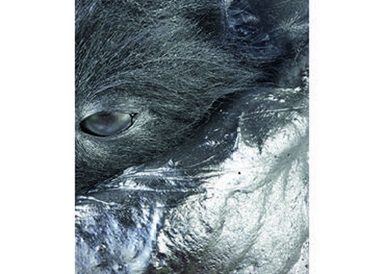 Animalité / Futuring à Maxeville