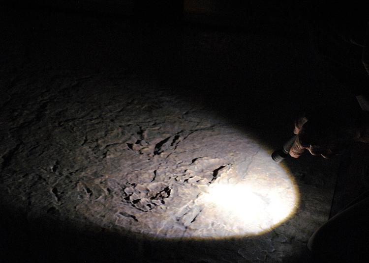 Animation  Des Fossiles à La Lampe De Poche ! à Lodeve