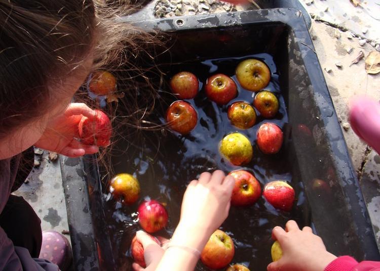 Animation Pour Enfants : Pressons ! Pressons ! Atelier Jus De Poire Ou Pomme à Barenton