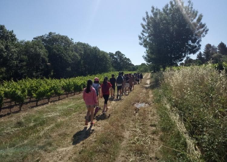 Animation Pour Scolaires / Levez Les Yeux ! Un Tour Sur La Petite Caminade Entre Pouzols Et Sainte-valière à Sainte Valiere
