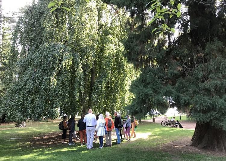 Arbres Remarquables Des Jardins De L'europe à Annecy