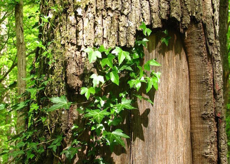 Arbres Remarquables Et Biotopes Singuliers à Salledes