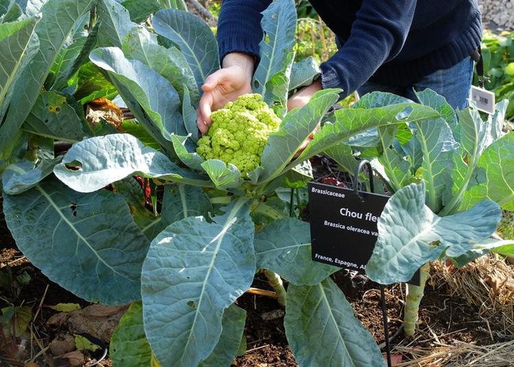 Atelier De Jardinage à Toulouse