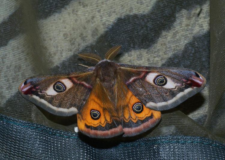 Atelier Découverte Des Papillons De Nuit. à Grenoble