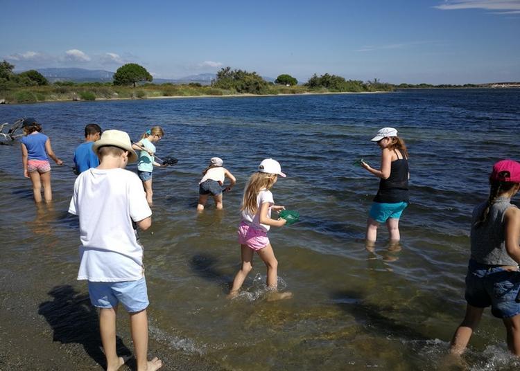 Atelier Découverte Des Petites Bêtes De La Lagune Et Des Dunes à Le Barcares