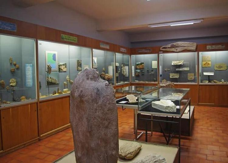 Atelier Des Fossiles De Madame Rose Escoffier Au Musueum Requien à Avignon