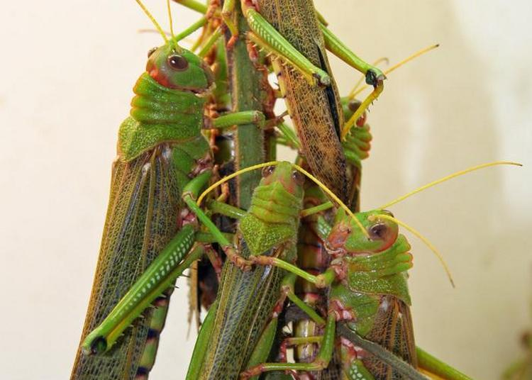 Atelier  Touche à Tout  à L'insectarium à Besancon