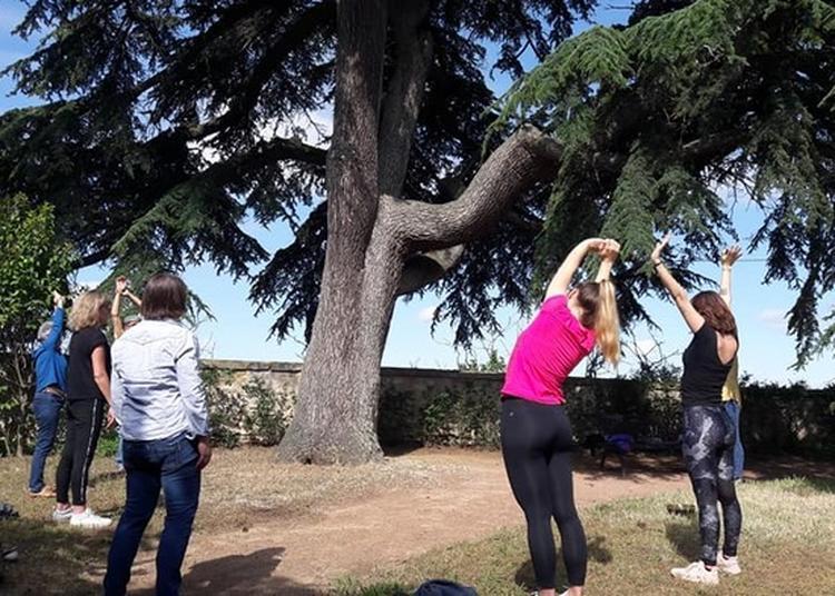 Atelier Yoga Par Sylvie Schmitt, Professeur De Yoga à Thouars